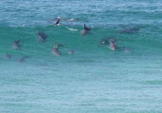 Dolphins#3
