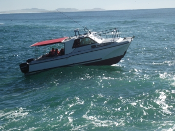 The Bay Warrior, whale watcher, got some great video from this boat